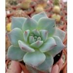 Набор для создания флорариума своими руками